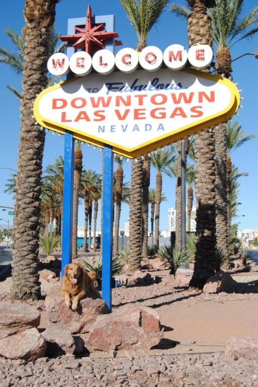 Abby at the Downtown Las Vegas sign